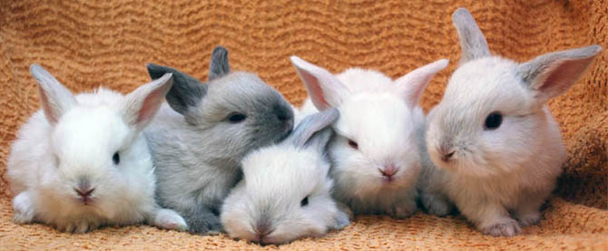 baby bunnies in a row